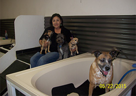 Muddy paws bath house self serve dog wash and grooming near denver i was literally thrown a life line when i created muddy paws bath house in 2006 i was diagnosed with breast cancer for the second time solutioingenieria Choice Image