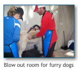 blow out room for furry dogs