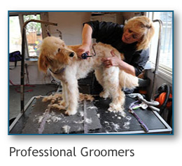 professional groomers